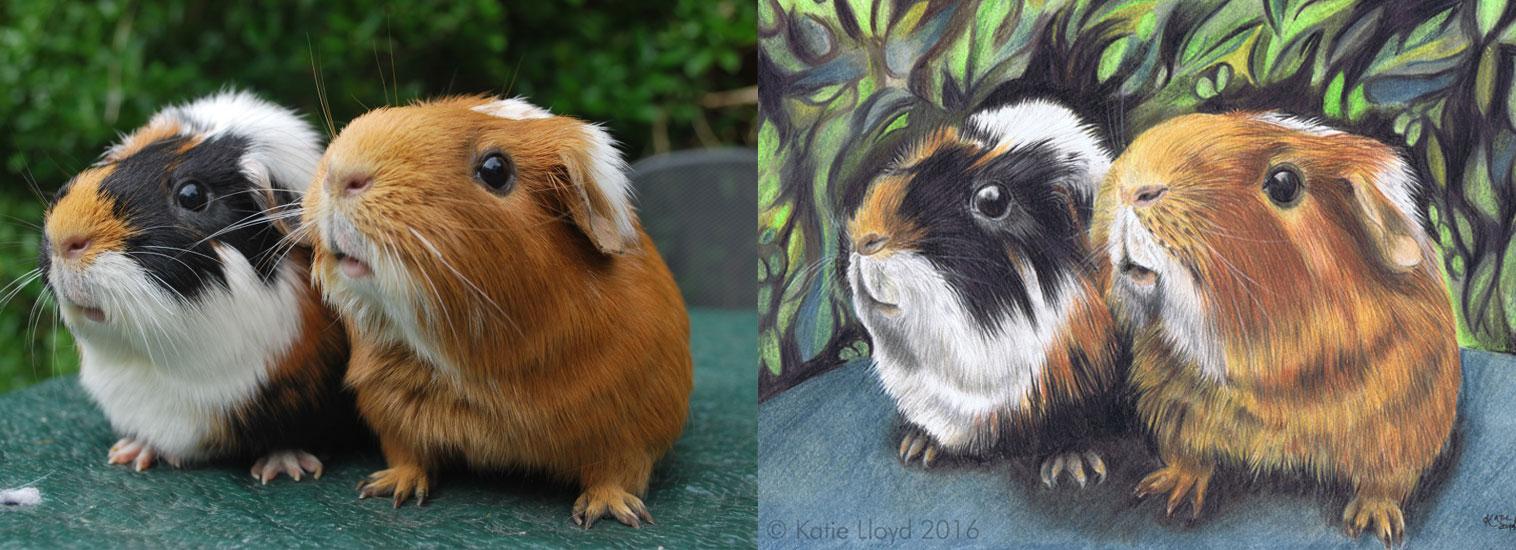 Guinea Pigs Photo